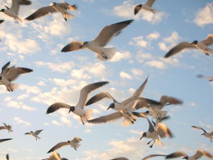 FL浜辺の鳥たち