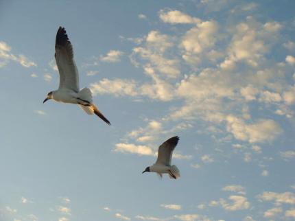 FLの鳥たち