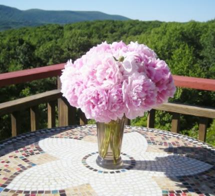 NYの庭に咲いた芍薬
