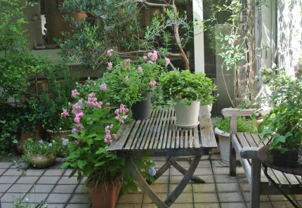 加藤千恵さまのcake教室の中庭
