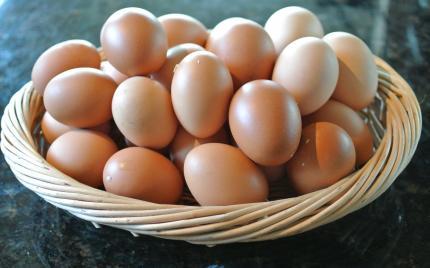 生みたて卵