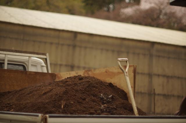 完熟牛糞牛の助と桜