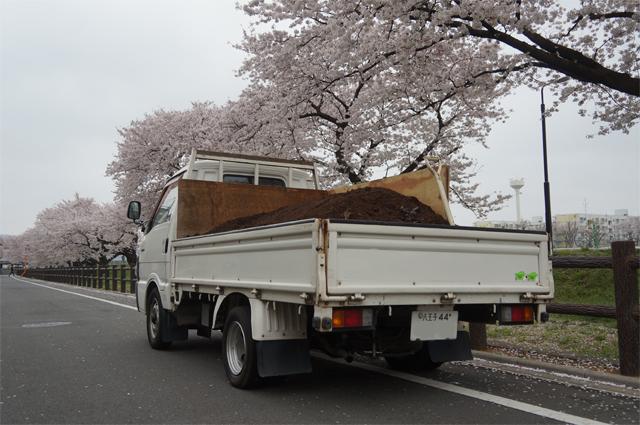 堆肥を載せたボンゴと桜並木