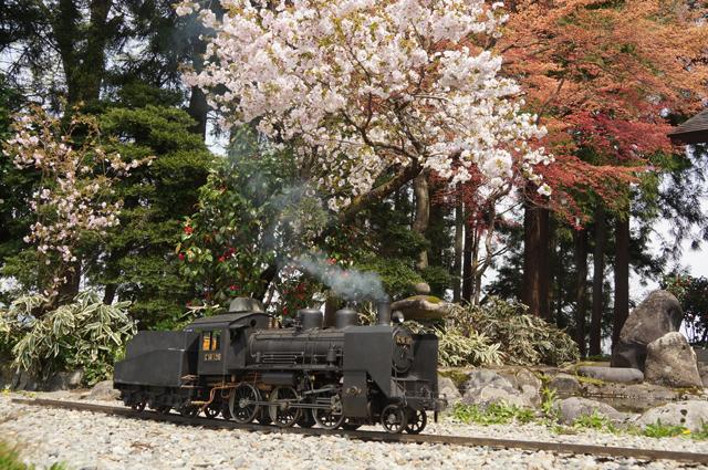 C56 129と池と桜とモミジ