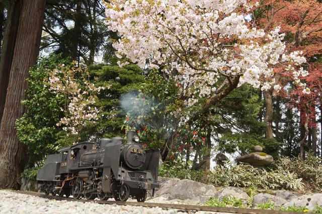 C56と桜