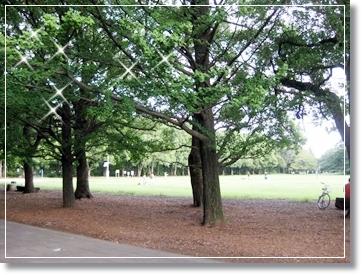 所沢ミューズの横の公園