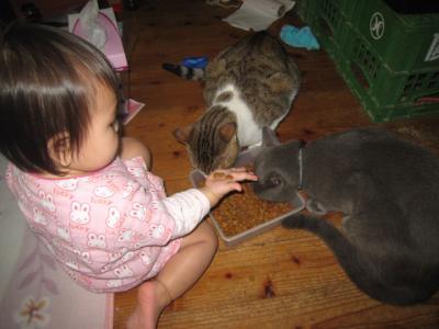タッキーネコ餌