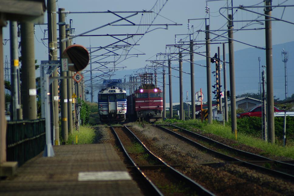 DSC01445.jpg