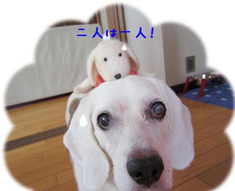 1_20110821175530.jpg