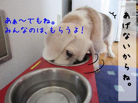 2_20110818162927.jpg