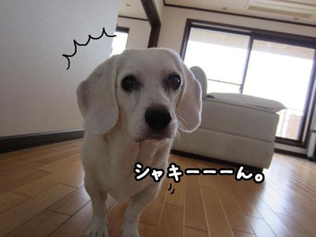 2_20110823135357.jpg