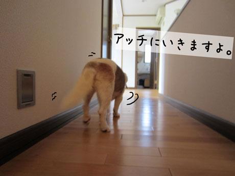 2_20110824142930.jpg