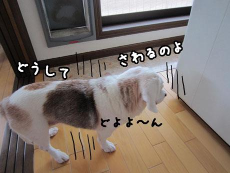 3_20110825173715.jpg