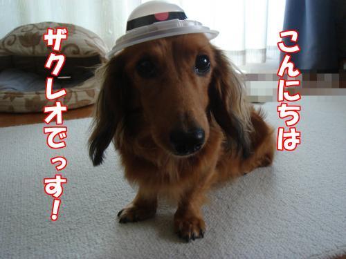 DSC09595_convert_20121011204122.jpg