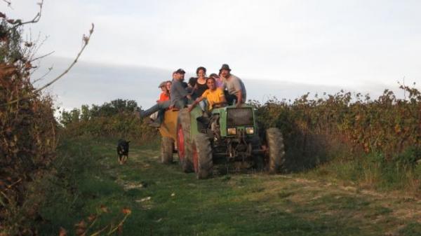 ガヤックブドウ収穫3433