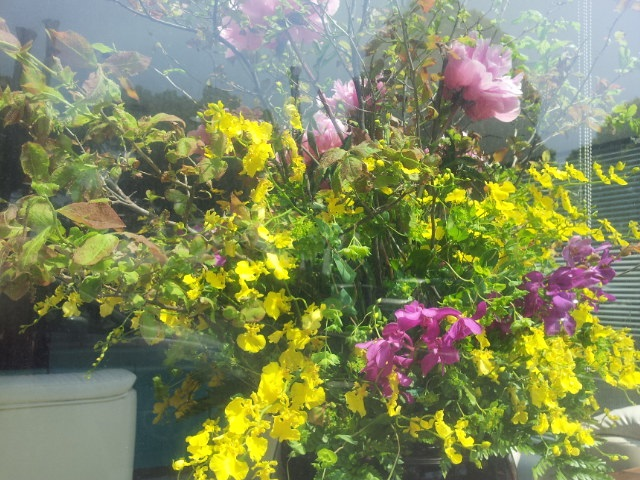 20130424_整形外科の花