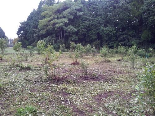 20131006_草刈り (2)