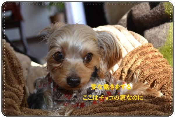 DSC_0732_2014010214105530f.jpg