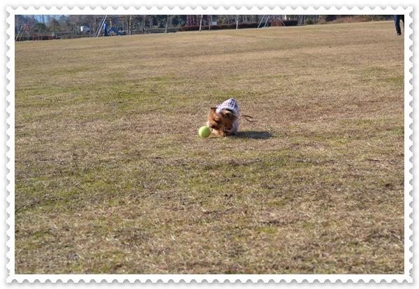 DSC_0910_20140111214850b3b.jpg