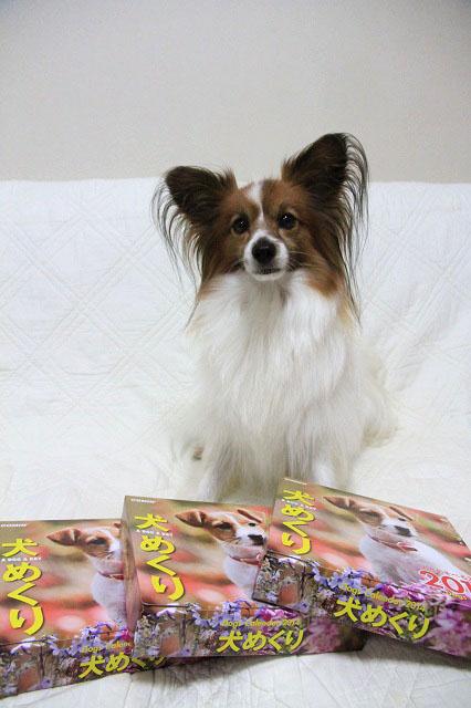犬めくり2014_3