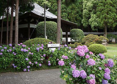 紫陽花の咲く岩本山・実相寺-7