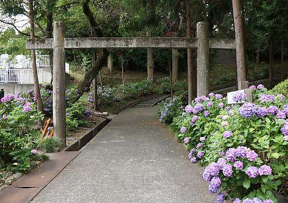 紫陽花の咲く岩本山・実相寺-6