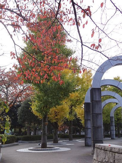 常盤公園の紅葉-2
