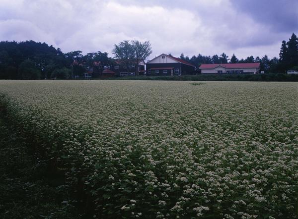 2011.08.22南郷山の学校07b