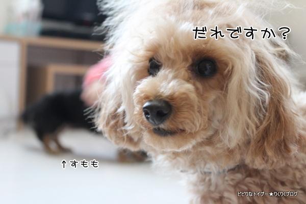 1-IMG_8837.jpg