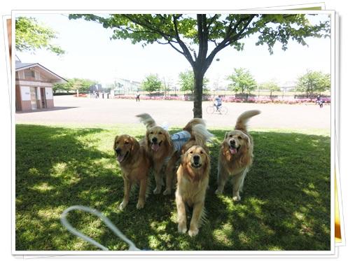 舎人公園10