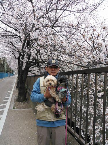 桜とりん海