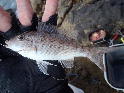20121007_fish1
