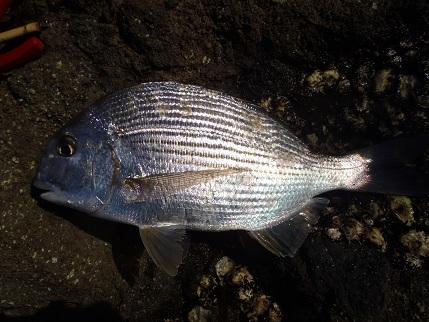 20121007_fish2
