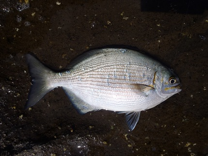 20121007_fish4
