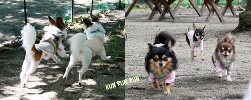 run_20131008232722970.jpg