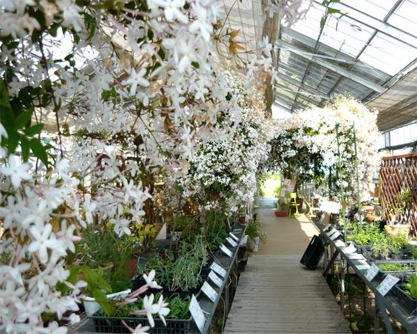 白い花は被写体としてむずかしいでs