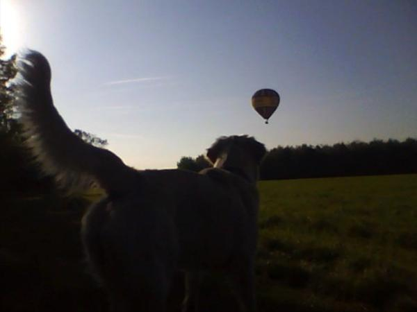 2011-10-14 Hot-Air Balloon (snapshot)