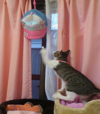 ぼうしと猫2
