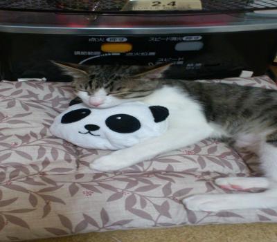 パンダと猫