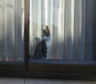 見送る猫1