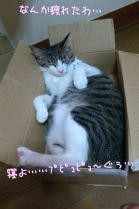 風呂猫55