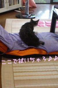 風呂猫44