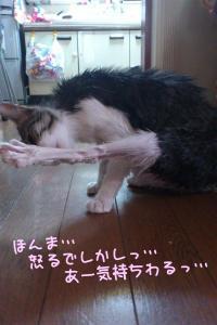 風呂猫33