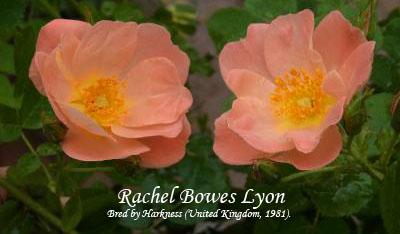 achel Bowes Lyon