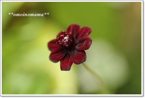 IMG_9988_20130528000123.jpg