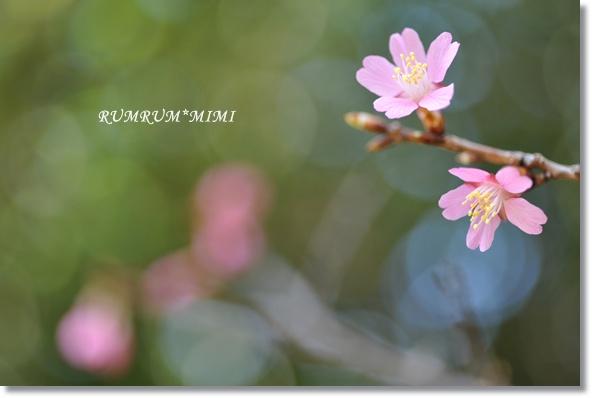 DSC_P8107.jpg