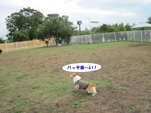 IMG_2956_20131020081146492.jpg