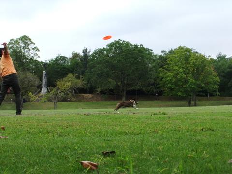 播磨中央公園9月 125