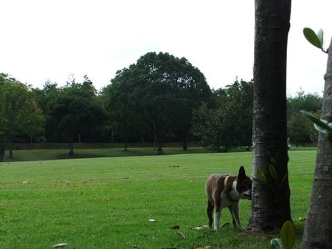 播磨中央公園9月 164