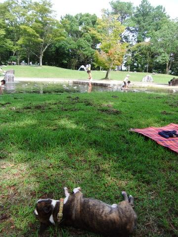 播磨中央公園9月 168